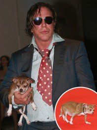 file_11_8401_celebs-who-look-like-their-dogs-mickey-rourke-10