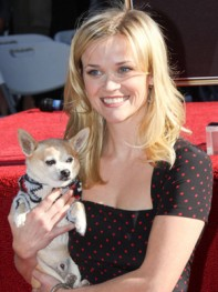 file_2_8401_celebs-who-look-like-their-dogs-reese-witherspoon-01