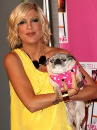 file_9_8401_celebs-who-look-like-their-dogs-tori-spelling-08